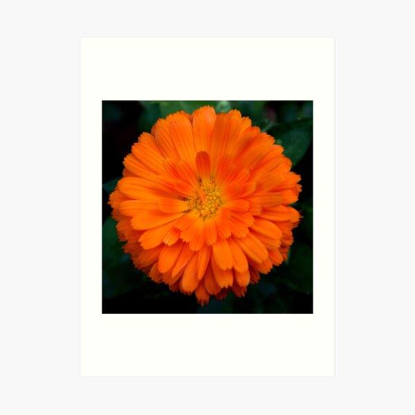 Orange Spray Art Print