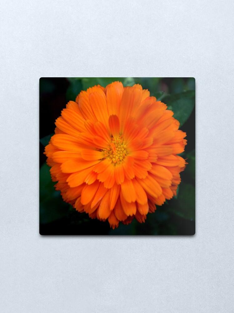 Alternate view of Orange Spray Metal Print
