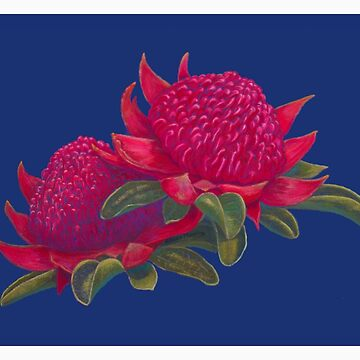 Waratah flowers - State Emblem of New South Wales by Ainslie1