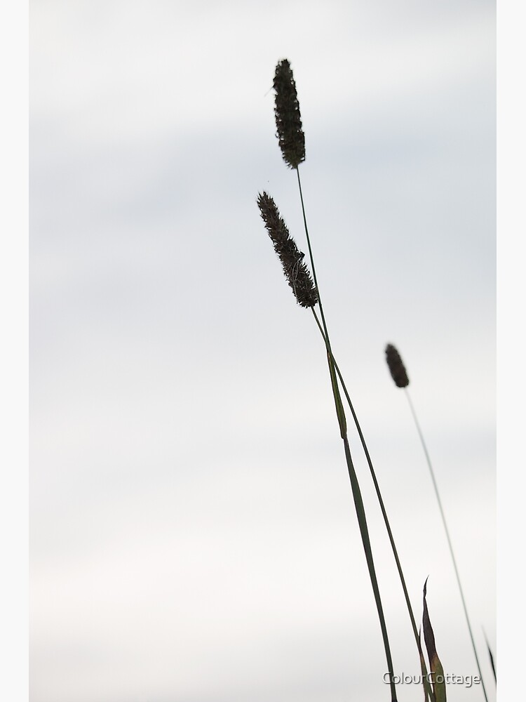 Grasses 1 by ColourCottage