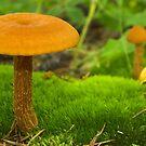 Mushroom Still Life by Tamas Bakos