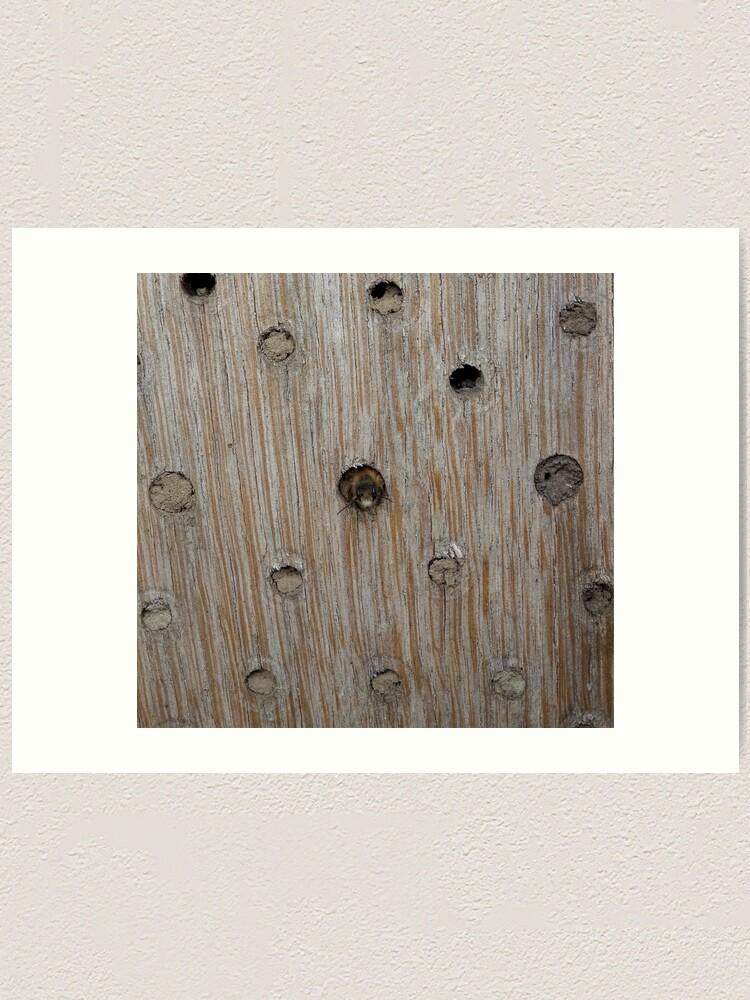 Alternate view of Emerging Mason Bee Art Print