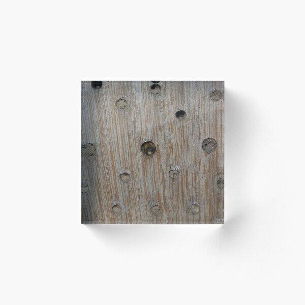 Emerging Mason Bee Acrylic Block