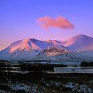 Blackmount Rose by Alexander Mcrobbie-Munro
