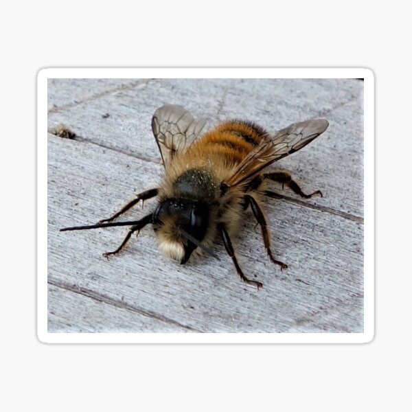 Fluffy Bee Sticker