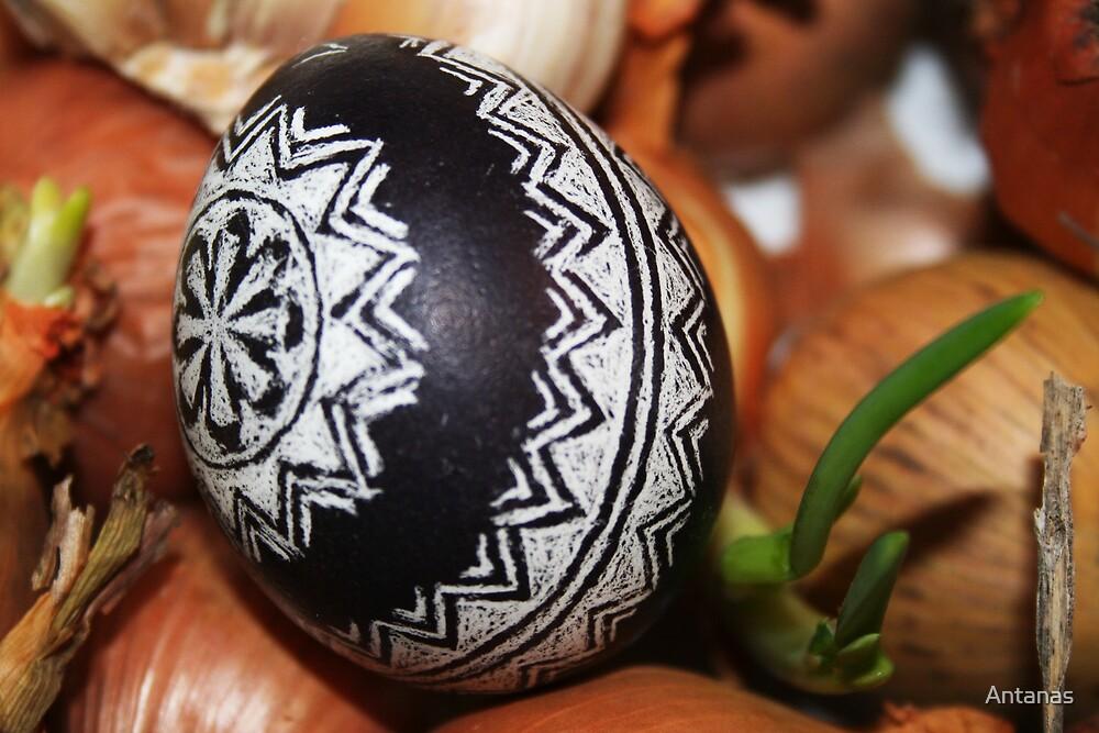 Easter Egg by Antanas