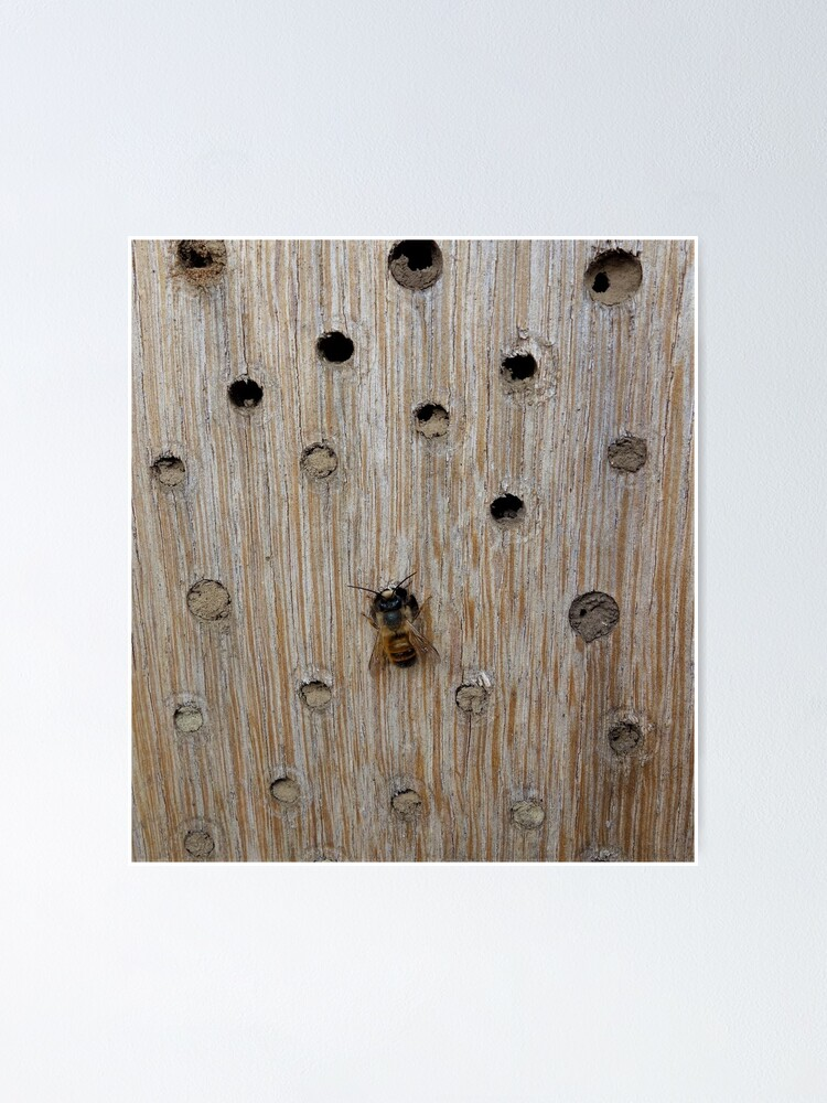 Alternate view of Solitary Bee Poster