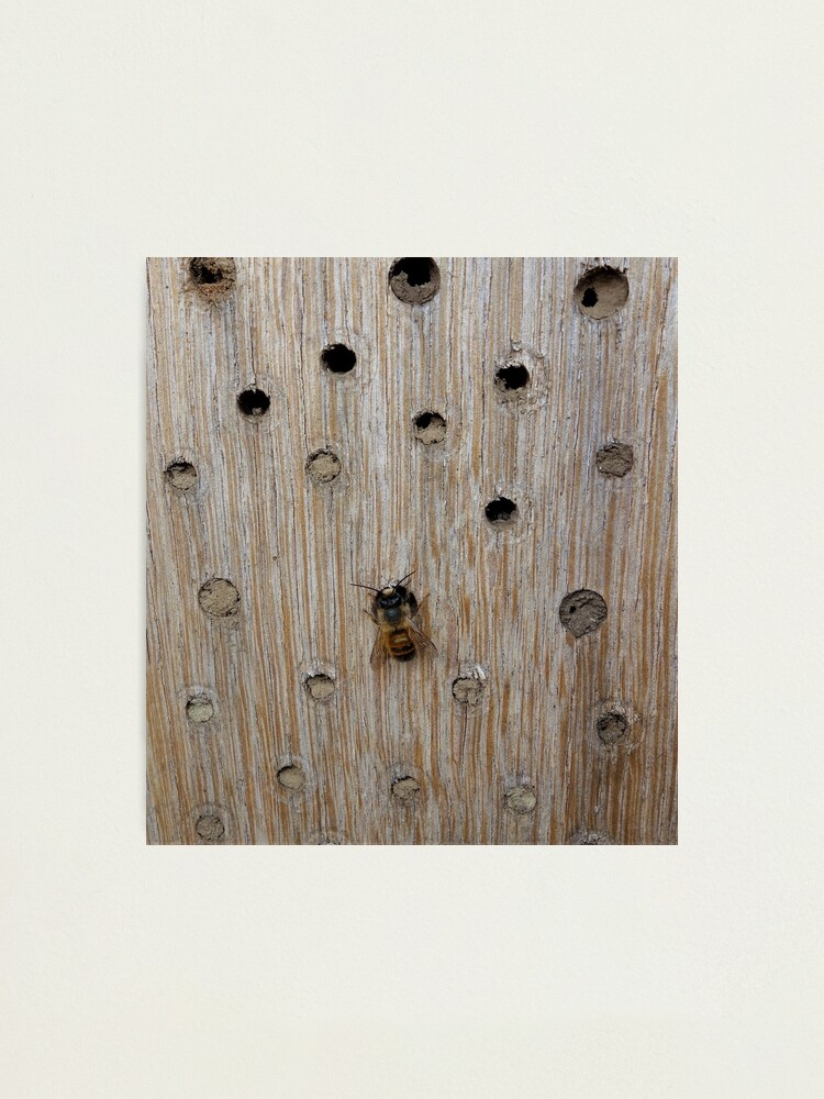 Alternate view of Solitary Bee Photographic Print