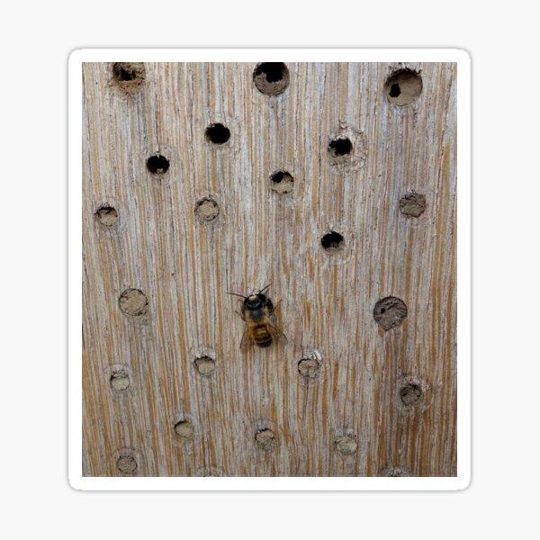 Solitary Bee Sticker