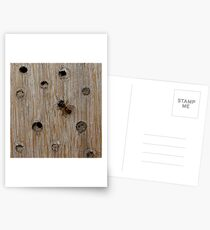 Solitary Bee Postcards