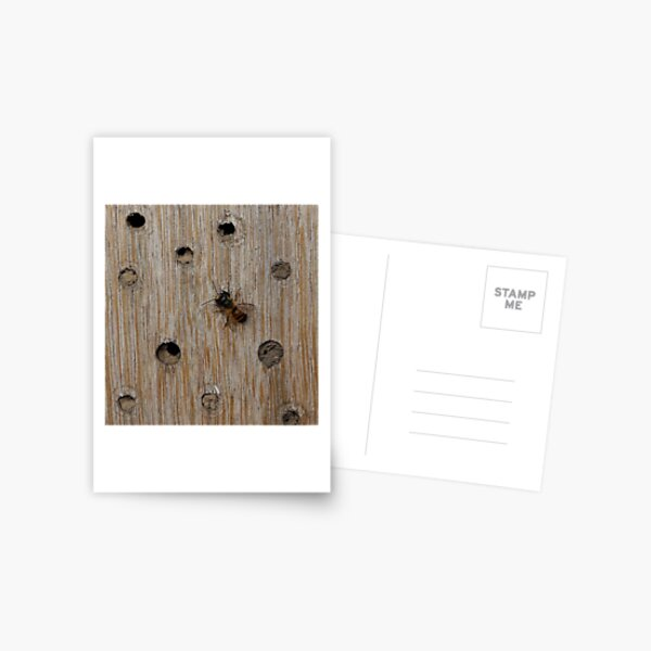 Solitary Bee Postcard