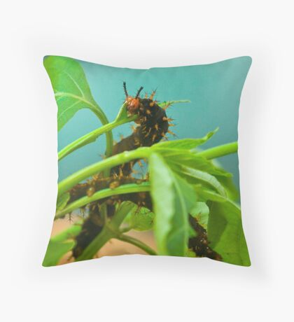 Larva of the Great Eggfly butterfly Throw Pillow