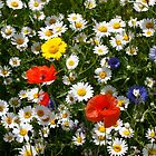Mixed Wildflowers by AnnDixon