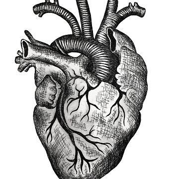 Anatomical heart etching  by ChristopherNeal