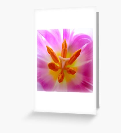 Softly...lilac tulip detail Greeting Card