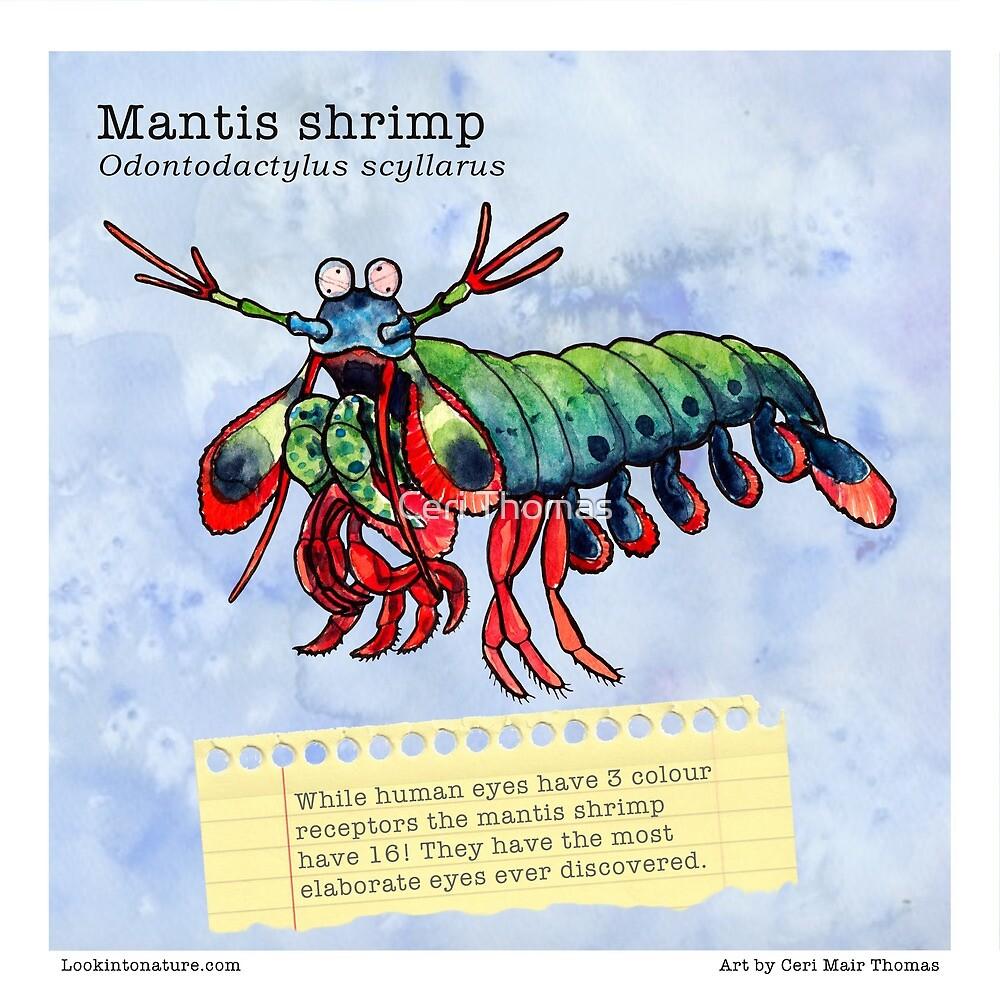 Mantis shrimp fact