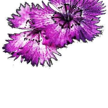 Dianthus (T-Shirt), dark, watercolor effect by Lenka