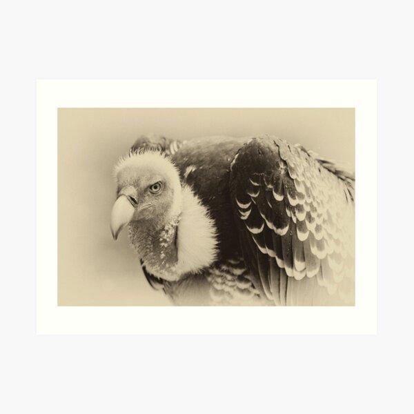Rueppell's Vulture: After a shower Art Print