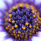 Nature's Pop Art! by Astrid Ewing Photography
