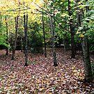 Autumn Mount Wilson 1 by Geoff Smith