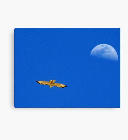 Red-tailed Hawk ~ Flight of the moon Canvas Print
