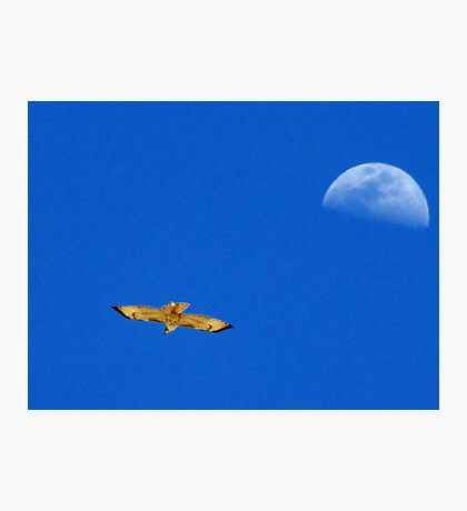 Red-tailed Hawk ~ Flight of the moon Photographic Print