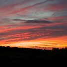 Tennessee Sunset by DariaGrippo