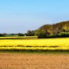 Rapeseed field by MarianaEwa