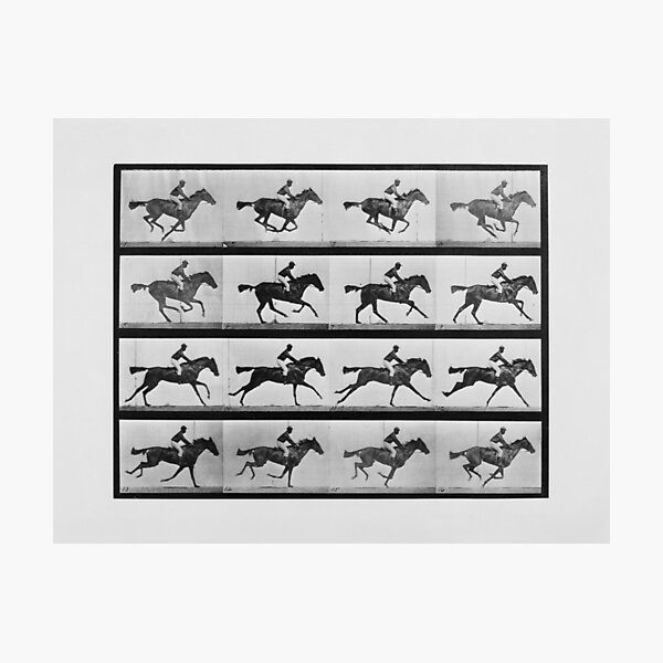 Animal Locomotion - 16 Frames Of Racehorse Annie G.  Photographic Print
