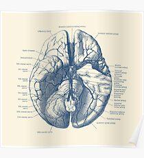 Human Brain Diagram Poster