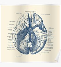 Human Brain Diagram Poster