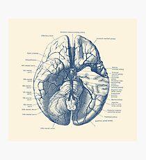 Menschliches Gehirn Diagramm Fotodruck