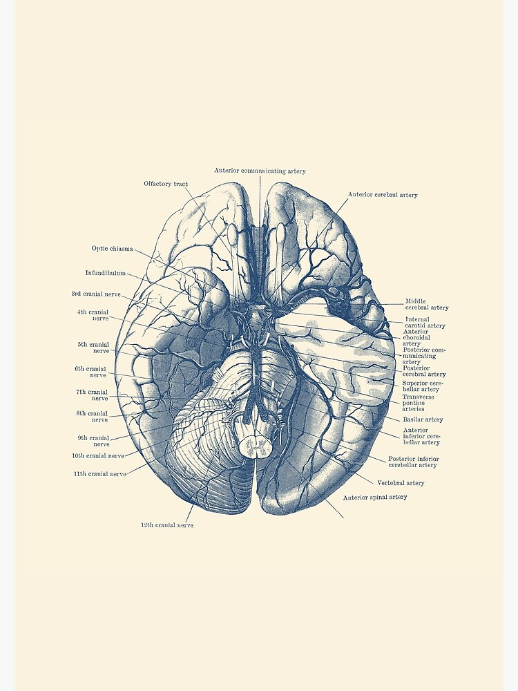 Human Brain Diagram by VAposters