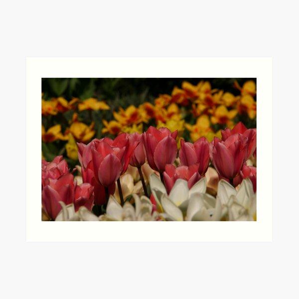 Totally Tulips Art Print
