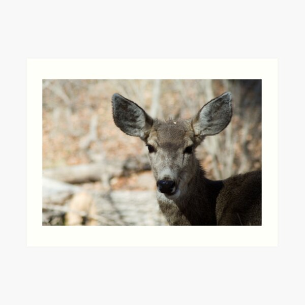 Mule Deer, Bandelier National Monument: The Life of the Party Art Print