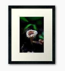 Fungi season 3 Framed Print