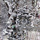 A Snow Shoe Tree...... Only in Canada EH! by Larry Llewellyn