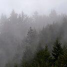 Misty Mountains - Hope British Columbia by Rick Nicholas