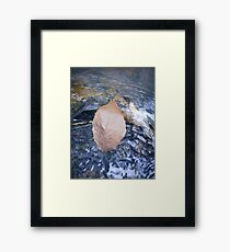 Tranquil Swim Framed Print