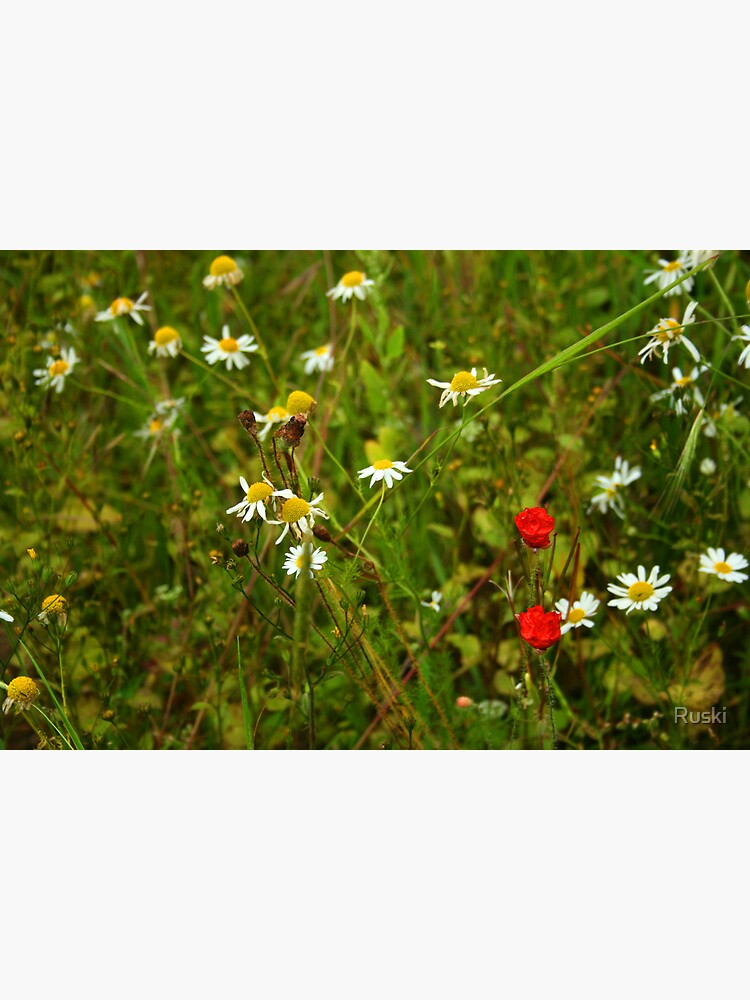Wild Flowers in the Meadow by Ruski