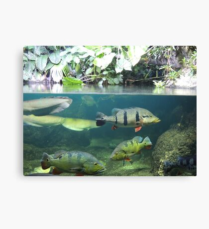 Above and Below Canvas Print