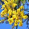 Australian Native Plants - add plant name, location and state