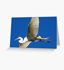 GREAT WHITE Egret soaring high above Greeting Card
