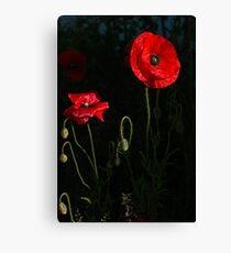 Red poppy 1 Canvas Print