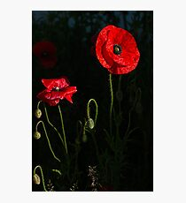 Red poppy 1 Photographic Print