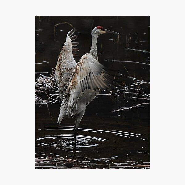 The Crane Ballet #2 Photographic Print