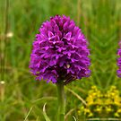Pyramidal Orchid - iPhone Case by George Row