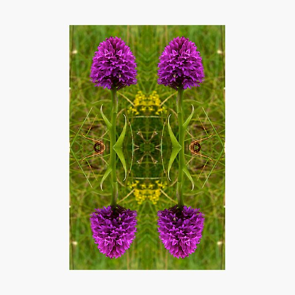 Pyramidal Orchid - iPhone Case Photographic Print