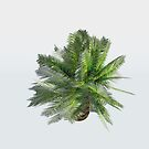Small Palm by dmark3