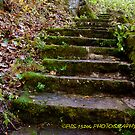 mossy stairway by PJS15204